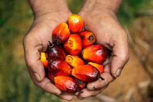 Going Green - Palm Oil