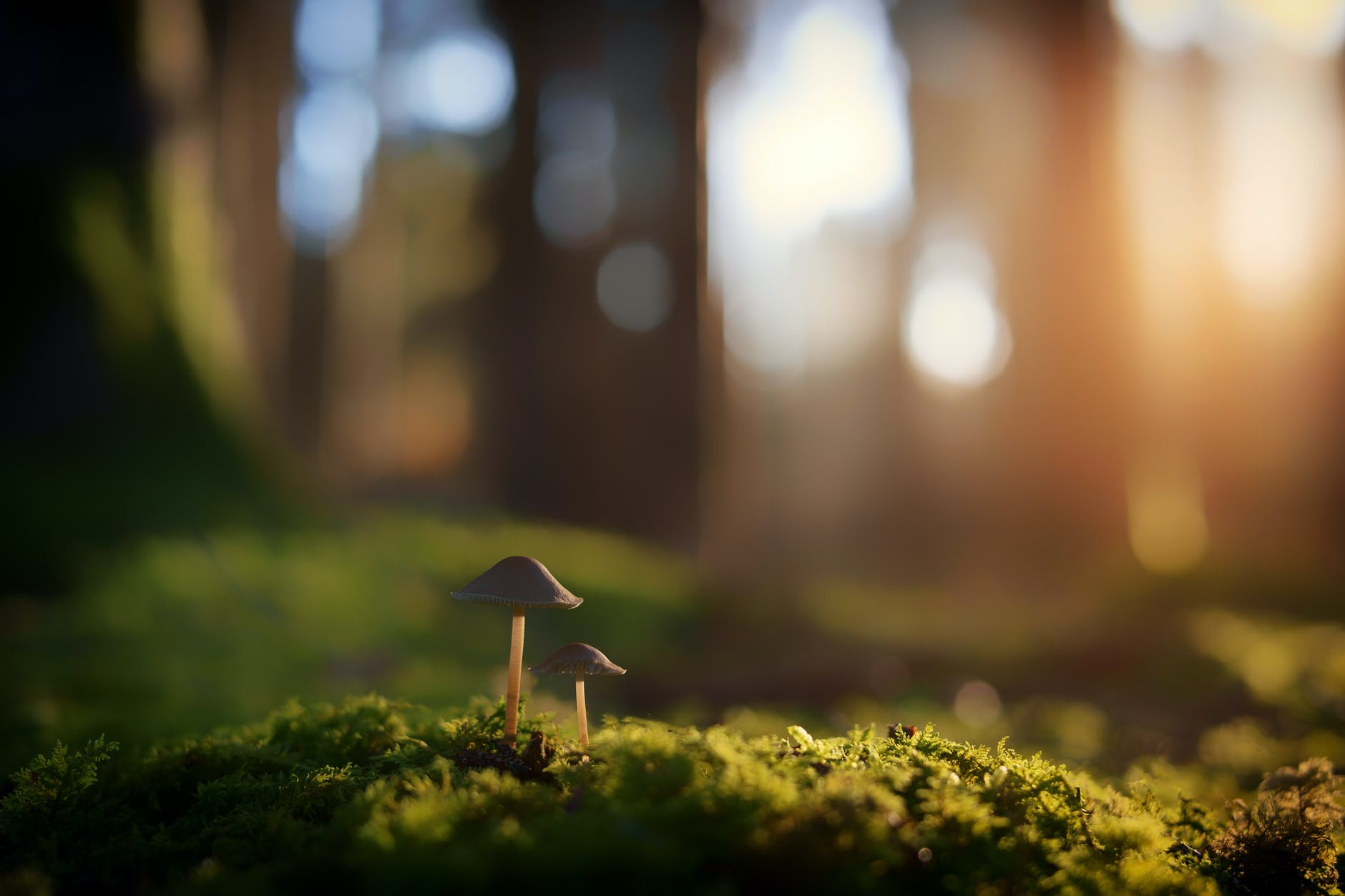shallow focus photography of brown mushrooms