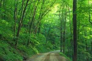 green tree beside roadway during daytime