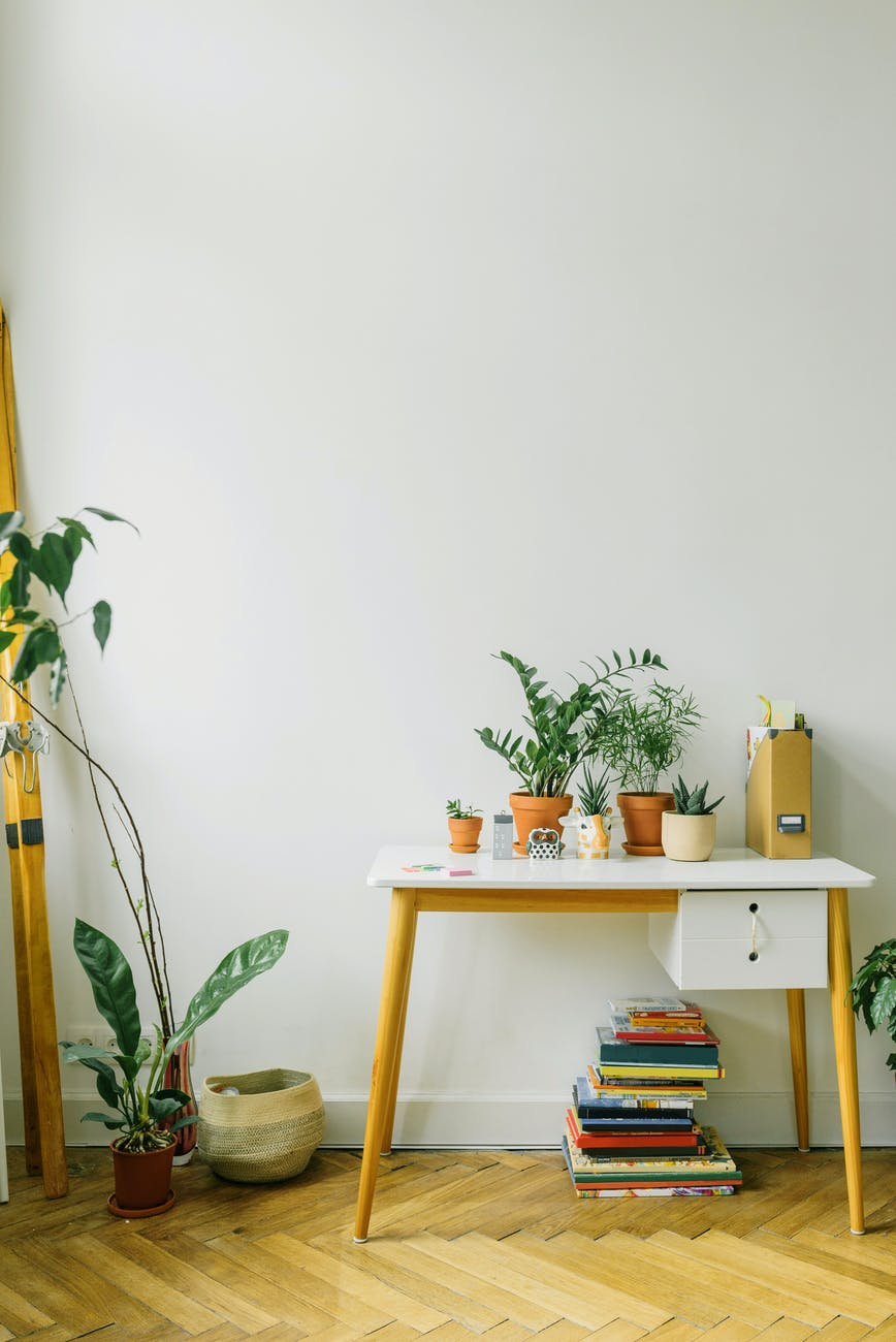 green potted plant on yellow and white wooden table
